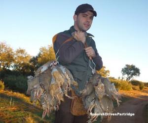 spanishdrivenpartridge - red-legged partridge shoot in spain