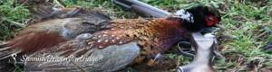 spanishdrivenpartridge - pheasant hunting in spain