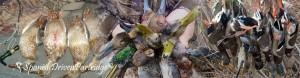 duck hunting in spain
