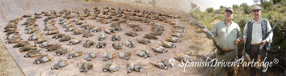spanishdrivenpartridge - red-legged partridge hunting in spain