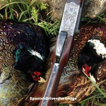 pheasant driven shooting in spain