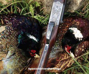 pheasant driven shooting in spain