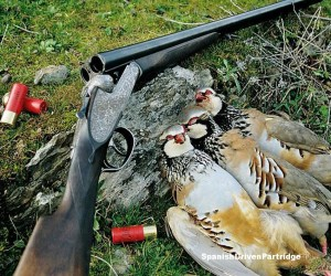 spanishdrivenpartridge - red-legged partridge shoot in spain